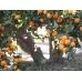 Mandarinas Clemenvillas